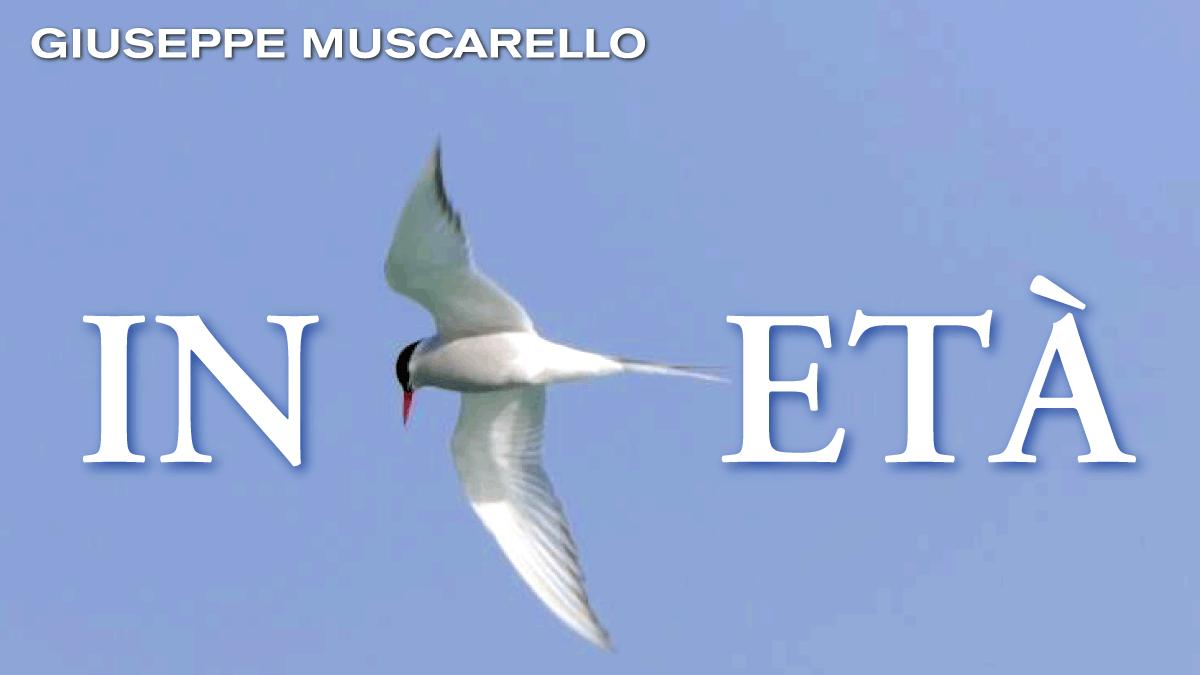 ARK.19. In Età Muscarello a_1200