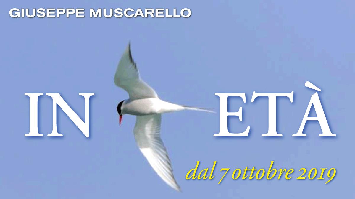 ARK.19. In Età Muscarello d_1200